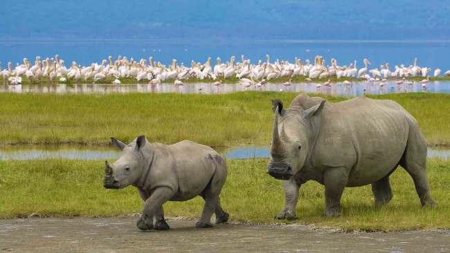 Tanzania Wildlife Diversity