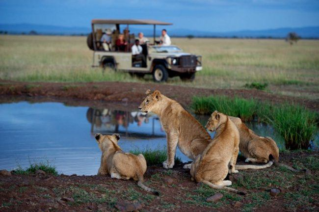 Iconic Wildlife Experiences Africa