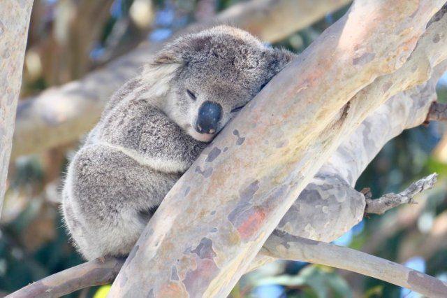 Help rehabilitate Australia Bushfire Tours